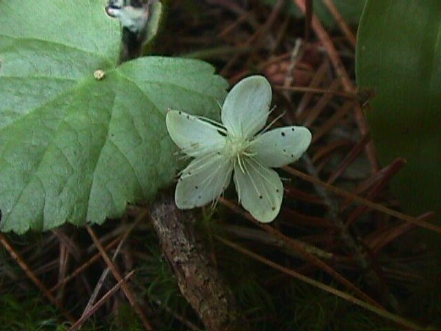 30 Wildflowers